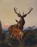 Male Elk Posters - A Stag with Deer in a Wooded Landscape at Sunset Poster by Charles Jones