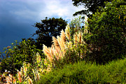 Pampas Grass Prints - A Storm Is A Brewin Print by Al Bourassa
