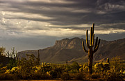 Saija  Lehtonen - A Stormy Evening in the Superstitions