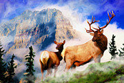 Bull Elk Digital Art Posters - A Stroll in the Mist Poster by Shawn Abel