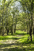Nature Prints - A stroll on a green trail in the city of Houston Print by Ellie Teramoto