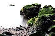 Stepping Stones Photo Prints - A Study in Green Print by JC Findley