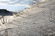 Sand Dunes Art - A Study in Perseverance   by JC Findley