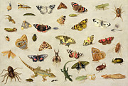 Lizards Paintings - A Study of insects by Jan Van Kessel