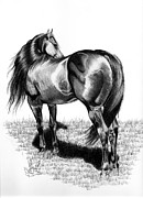 Horse Images Drawings Prints - A Study of the Thoroughbred Hindquarters in Bic Pen Print by Cheryl Poland