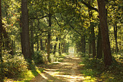 HJBH Photography - A sunny autumn day in the forest