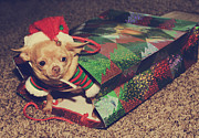 Small Dog Prints - A Sweet Christmas Surprise Print by Laurie Search
