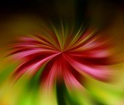 Blended Art - A Swirled Flower by Jeff  Swan