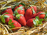 Strawberry Prints Framed Prints - A Taste Of Summer Framed Print by Peter Chapman