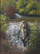 Colorado Mountain Stream Paintings - A Taste of the Poudre River by Bev Finger