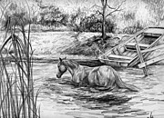 Wild Horses Drawings - A Texas Swim by Sheri Marean