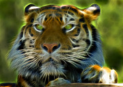 Tiger Fractal Photos - A Tigers Stare II by Ricky Barnard