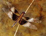 Pamela Phelps - A time for Dragonflies