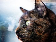 Tortie Prints - A Tortie In Profile Print by Rene Crystal
