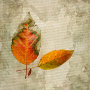 Textured Photograph Prints - A Touch of Autumn #1 Print by Betty LaRue