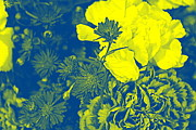 A Touch Of Gold On Blue Print by  Photographic Art and Design by Dora Sofia Caputo