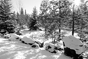 Snowy Forest Posters - A Touch of Snow - Black and White Poster by Carol Groenen