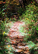 Danielle Smith Metal Prints - A trail less Traveled Metal Print by Danielle Smith