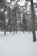 Cross Country Skiing Posters - A Trail through the Forest Poster by Tim Grams