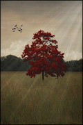 Open Field Posters - A Tree In Autumn Poster by Tom York