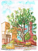 Scenic Drive Paintings - A tree in Horn Drive - Hollywood Hills - Los Angeles - California by Carlos G Groppa