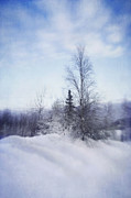 Snowed Trees Photos - A Tree In The Cold by Priska Wettstein