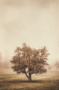 Monochrome Art - A Tree in the Fog by Scott Norris