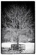 Snow Tree Prints Art - A Tree in the Snow by John Rizzuto