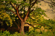 Beautiful Tree Photos - A Tree by Jenny Rainbow