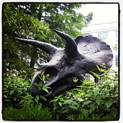 Gregory Dyer - A Triceratops from the Smithsonian Museum in Washington DC