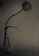 Fine Photography Art Photos - A Tulip in charcoal by Constance Fein Harding
