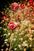 Daydream Art - A Tulips Daydream by Loriental Photography