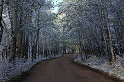 Dirt Roads Photo Originals - A Tunnel of Trees by Cynthia  Cox Cottam