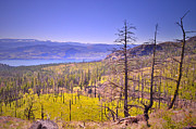Tara Turner Framed Prints - A View from Okanagan Mountain Framed Print by Tara Turner