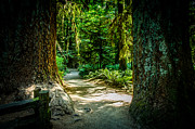 Landscape Photography Of The Year Prints - A Walk Among The Giants Collection 1 Print by Roxy Hurtubise