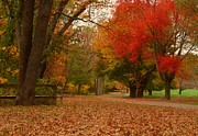 Landscapes - A Walk In Autumn - Holmdel Park by Angie McKenzie