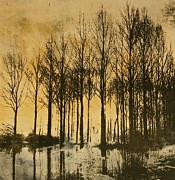 Tree In Golden Light Art - A walk in France- lithograph by Deborah Talbot - Kostisin