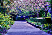 Cheryl Young Metal Prints - A Walk in the Garden Metal Print by Cheryl Young