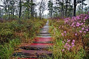 Saco Prints - A Walk In The Heath Saco Maine Print by Jeff Sinon