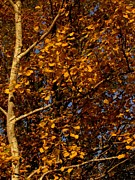 Bridget Johnson Metal Prints - A Walk In The Park - Birch Metal Print by Bridget Johnson