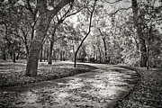 Taking Framed Prints - A Walk In The Park Framed Print by Darryl Dalton