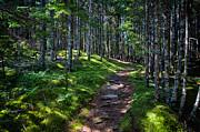 A Walk In The Woods Print by John Haldane