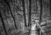 Monochrome Prints - A Walk Through the Woods Print by Scott Norris