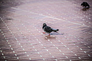 Walking Birds Originals - A Walking Hero by Svitlana Vronska