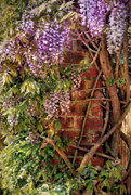 Wobblymol Davis - A Wall Of Wisteria