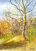 Madeline  Lovallo - A Watercolor Tree in...