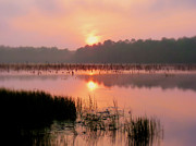 Southern Alabama Framed Prints - A Wetlands Sunrise Framed Print by JC Findley