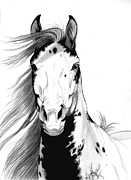 Wild Horses Drawings - A Wild Mustang I called Geronimo by Cheryl Poland