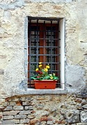 Flower Boxes Posters - A Window In Tuscany Poster by Mel Steinhauer