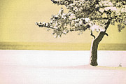 A Winter Moment Print by Karol  Livote